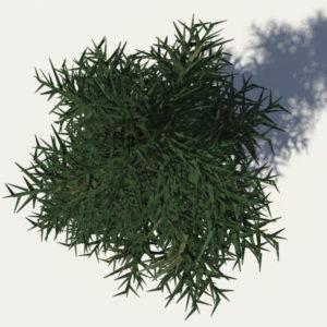conifer-tree-3d-model-4