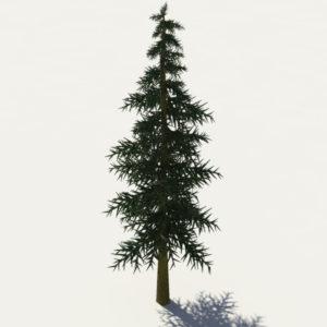 conifer-tree-3d-model-5
