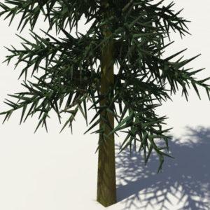 conifer-tree-3d-model-6