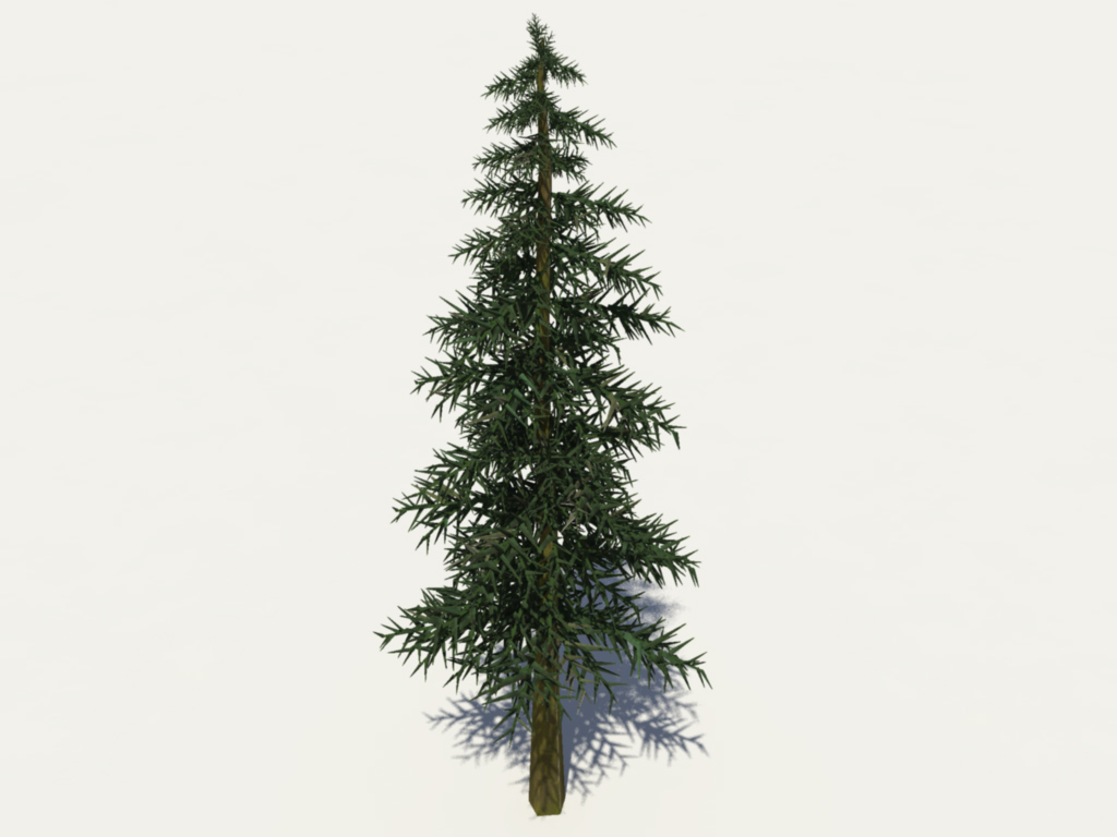 conifer-tree-3d-model-7