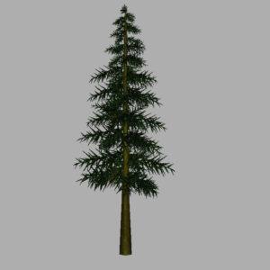 conifer-tree-3d-model-8