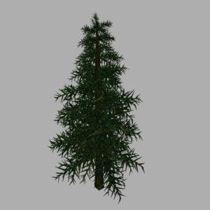 conifer-tree-3d-model-9