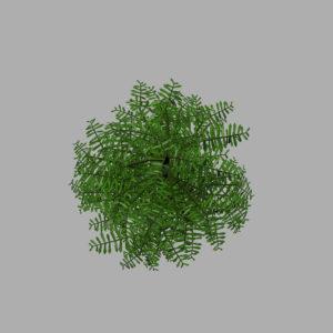 conifer-tree-green-3d-model-10