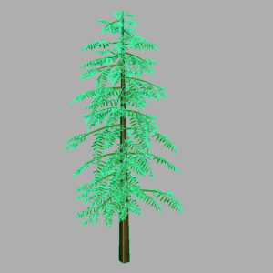 conifer-tree-green-3d-model-11