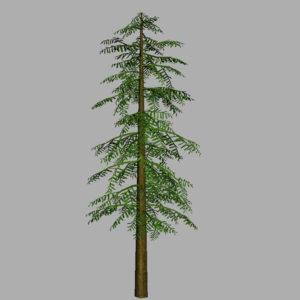 conifer-tree-green-3d-model-13