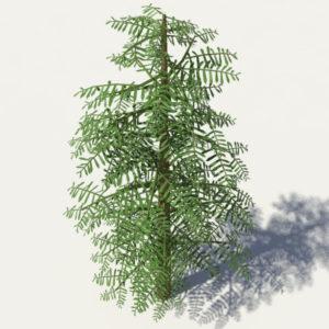 conifer-tree-green-3d-model-3