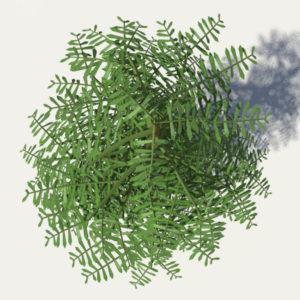conifer-tree-green-3d-model-4