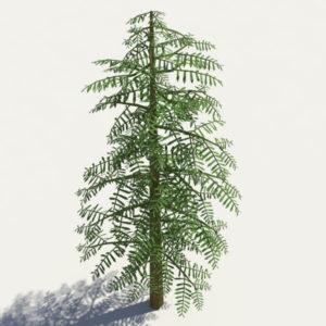 conifer-tree-green-3d-model-5