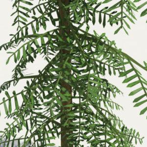 conifer-tree-green-3d-model-6