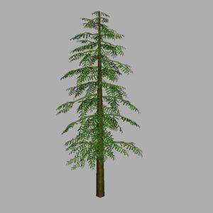 conifer-tree-green-3d-model-7