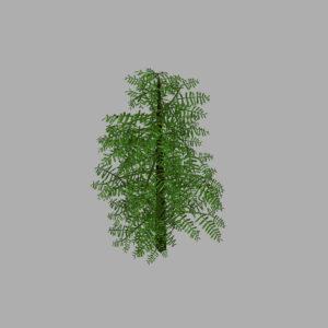conifer-tree-green-3d-model-8
