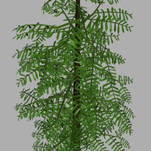 conifer-tree-green-3d-model-9