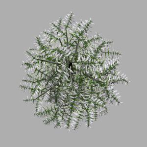 conifer-tree-snow-3d-model-10
