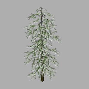 conifer-tree-snow-3d-model-13