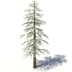 conifer-tree-snow-3d-model-2