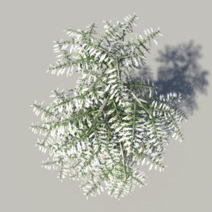 conifer-tree-snow-3d-model-4