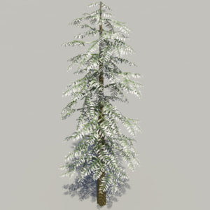 conifer-tree-snow-3d-model-6