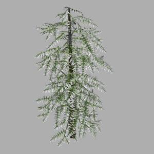 conifer-tree-snow-3d-model-8