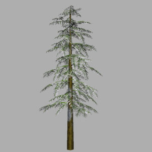conifer-tree-snow-3d-model-9