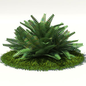 Fern Bush 3D Model – Realtime