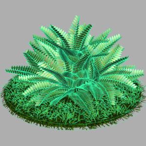 fern-bush-3d-model-shrubs-10