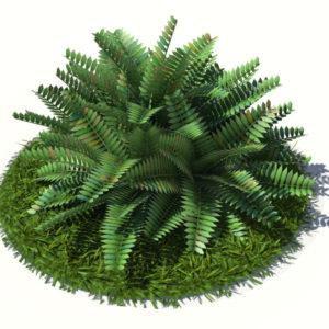 fern-bush-3d-model-shrubs-2