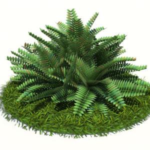 fern-bush-3d-model-shrubs-3