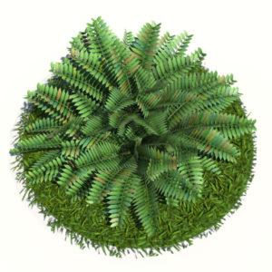 fern-bush-3d-model-shrubs-4