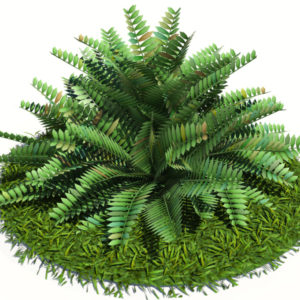 fern-bush-3d-model-shrubs-5