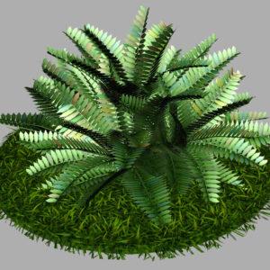 fern-bush-3d-model-shrubs-6
