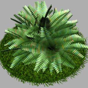 fern-bush-3d-model-shrubs-7