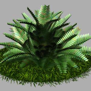 fern-bush-3d-model-shrubs-8