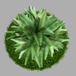 fern-bush-3d-model-shrubs-9