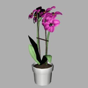 orchid-pot-3d-model-pink-13