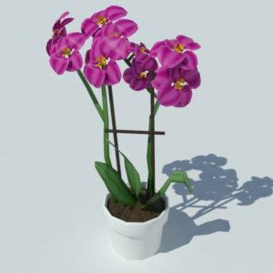 Orchid Pot 3D Model – Realtime