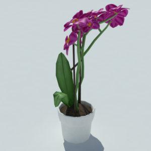 orchid-pot-3d-model-pink-4