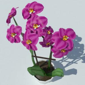 orchid-pot-3d-model-pink-5