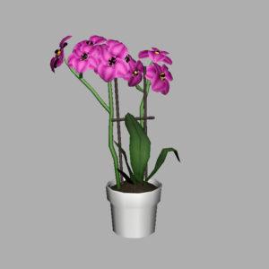orchid-pot-3d-model-pink-8