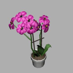 orchid-pot-3d-model-pink-9