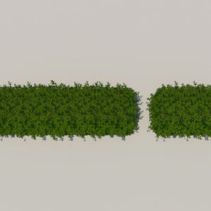 hedge-rectangular-3d-model-1