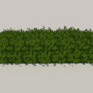 hedge-rectangular-3d-model-2
