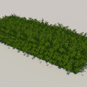 hedge-rectangular-3d-model-3