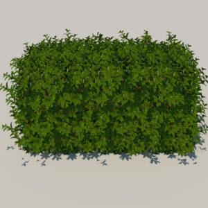 hedge-rectangular-3d-model-4