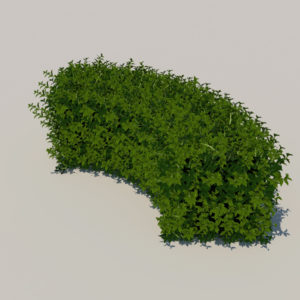 round-hedge-plants-3d-model-7