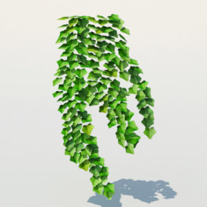 ivy-plant-3d-model-13