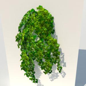 ivy-plant-3d-model-2