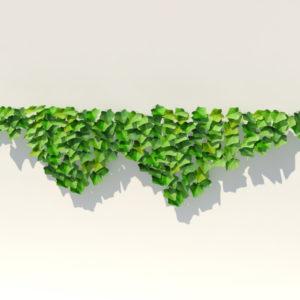 ivy-plant-3d-model-20