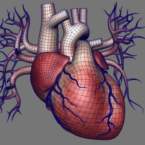 human-heart-3d-model-11