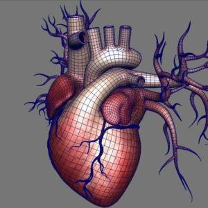 human-heart-3d-model-13