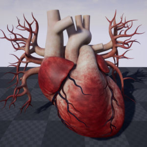 human-heart-3d-model-18